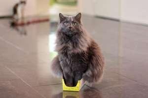 7946810-R3L8T8D-650-funny-cats-if-it-fits-i-sits-14
