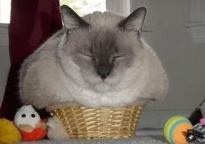 7946860-R3L8T8D-650-funny-cats-if-it-fits-i-sits-7